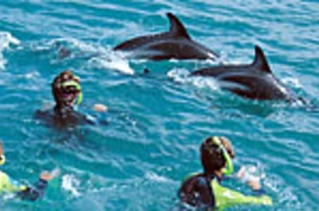 Kaikoura Swim with Dolphins Tour from Christchurch