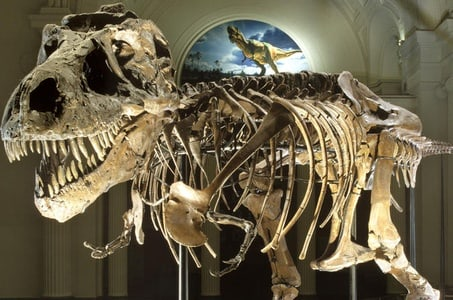 Field Museum of Natural History Admission