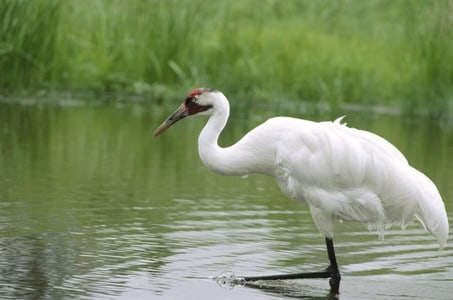 Full-Day Private Tour to Bharatpur from Agra