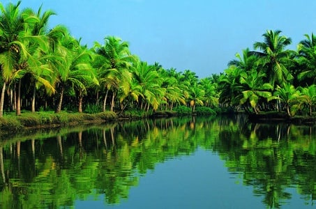 Pacific Princess Special Kochi Shore Excursion: Backwater Houseboat Tour and Fort Kochi