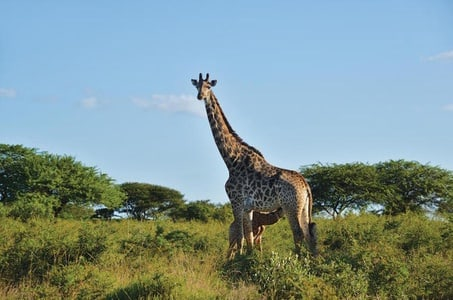 12-Day Highlights of the Cape and KwaZulu Natal Tour from Cape Town