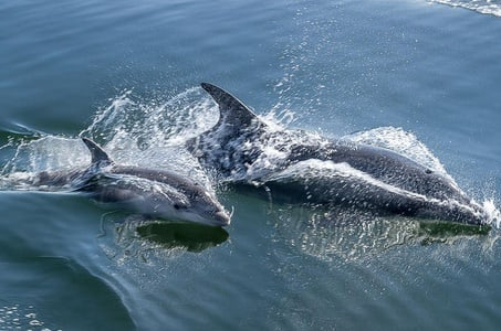 Half-Day Dolphin and Seal Watching Tour from Walvis Bay