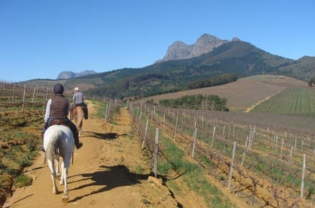 Private Wine Country Tour with a Twist from Cape Town