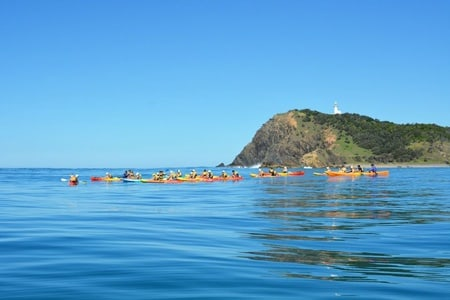 3-Hour Dolphin Spotting Kayak Tour in Byron Bay