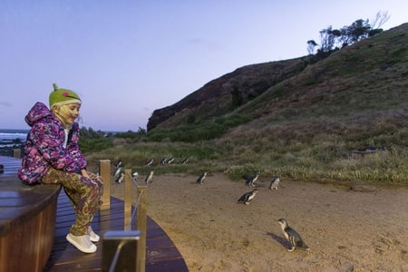 From Melbourne: Penguin Parade and Koalas Tour