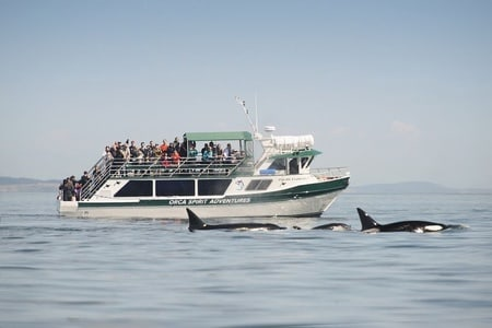 Victoria 3-Hour Whale Watching Tour by Covered Boat