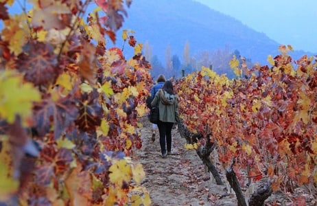 From Santiago: Colchagua Valley Wine Route Tour