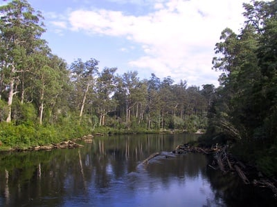 Huon Valley Day Trip from Hobart with Tahune AirWalk Forest Treetop Experience
