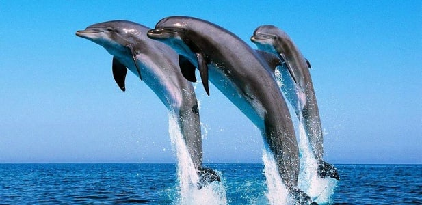 9-Hour Dolphin Snorkeling Tour from Hurghada