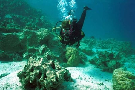 Full-Day Scuba Diving Tour with Lunch & Pick-Up