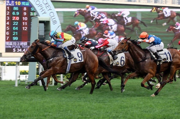Chinese New Year Horse Racing Tour in Hong Kong