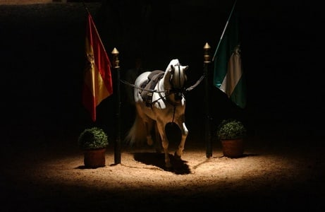 Jerez de la Frontera: How the Andalusian Horses Dance