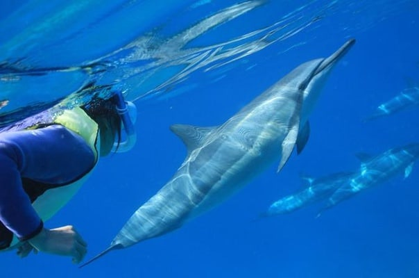 Oahu Snorkel Cruise: Swim with Dolphins and Turtles in the Wild