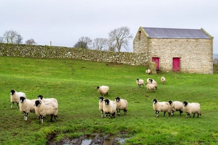 Best of the Yorkshire Dales Full-Day Tour from York