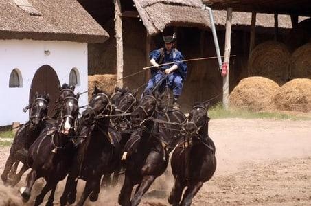 Private tour with horse show followed by carriage ride and lunch near Budapest