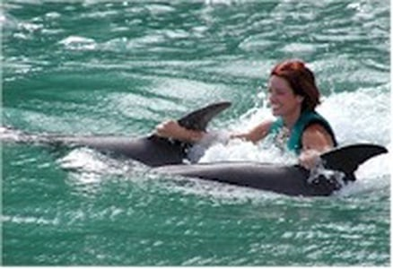 Swim with the Dolphins at Negril's Dolphin Cove