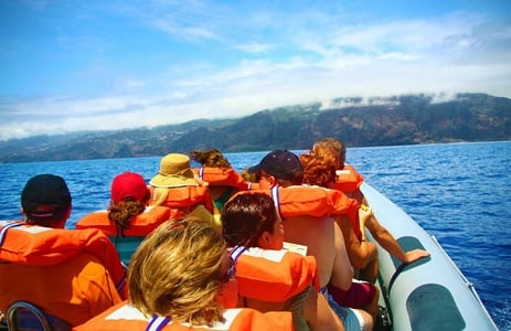 2.5 Hour Whale and Dolphin Watching: Madeira Archipelago
