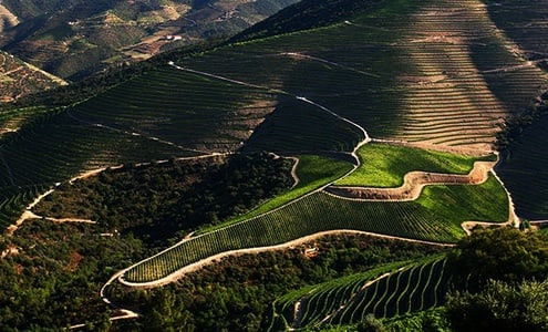 Douro Valley Full-Day Wine Tour with Lunch and Tastings