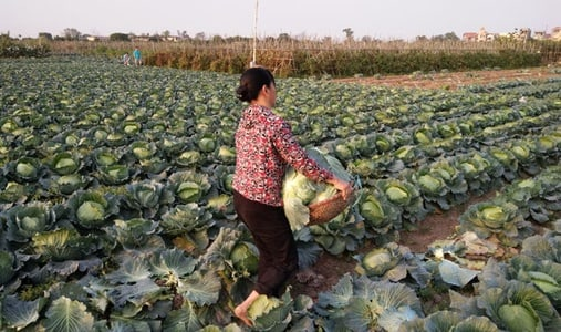 Farm Tour and Cooking in Hanoi with local Family