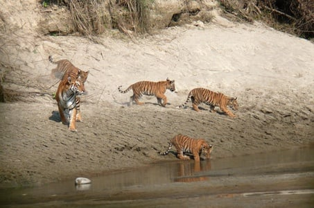 3 night 4 Days Jungle Safari in Bardia National Park in Nepal