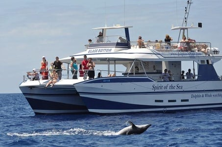 Whale & Dolphin Watching in Gran Canaria