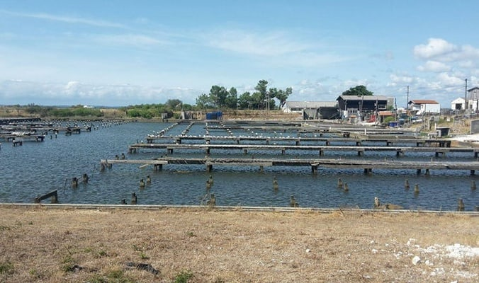 Local tour at the oyster-farming port