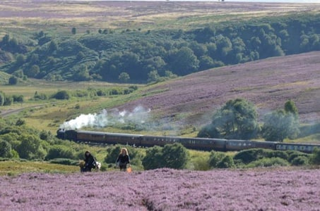 Steam Trains, Whitby, and the North York Moors Full-Day Tour from York