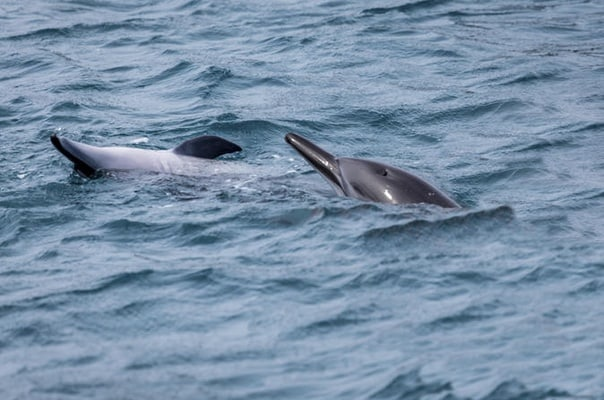 Dolphin Cruise from Muscat