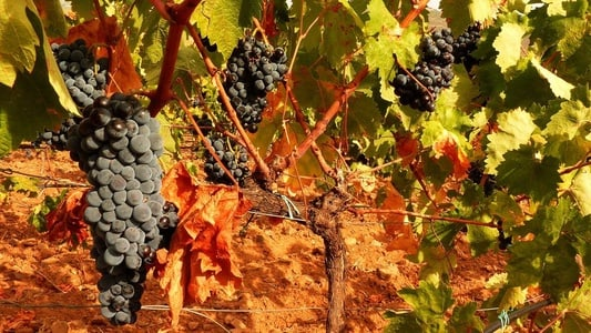 Cagliari: Food and Wine Tour to the Island Wineries