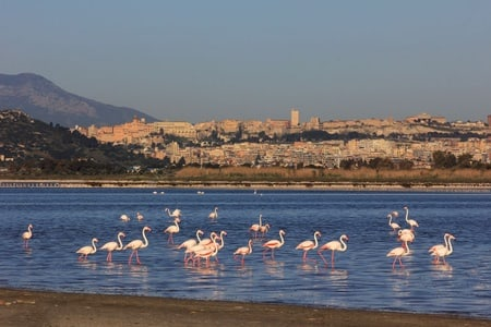 From Cagliari: West Beaches Tour