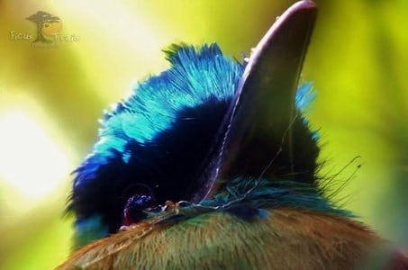 Bird Watching Tour in Monteverde
