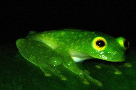 Monteverde Rainforest Night Walk
