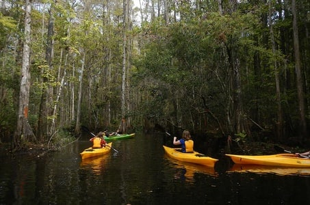 2-Hour Eco-Transition Guided Kayak Tour