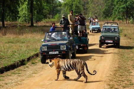 Private 3-Day Ranthambhore Tiger Tour from Agra including Agra and Jaipur
