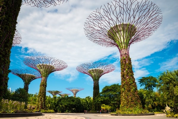 Gardens by the Bay SuperTree Restaurant Dining + Singapore Hop On Hop Off Tour