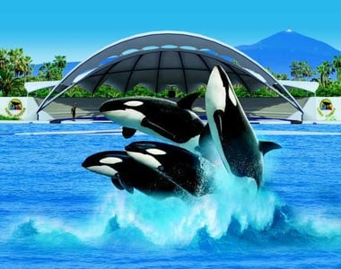 Tenerife: Loro Parque Tickets and Express Transfer