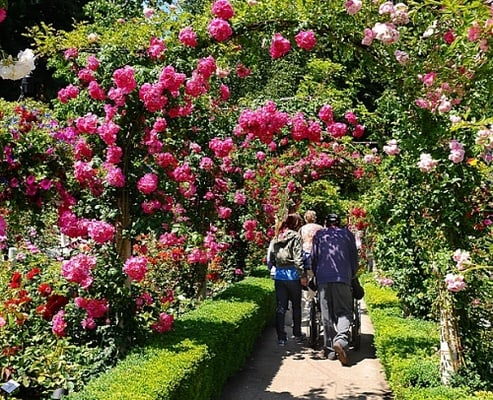 Butchart Gardens And Victoria Butterfly Gardens Tour