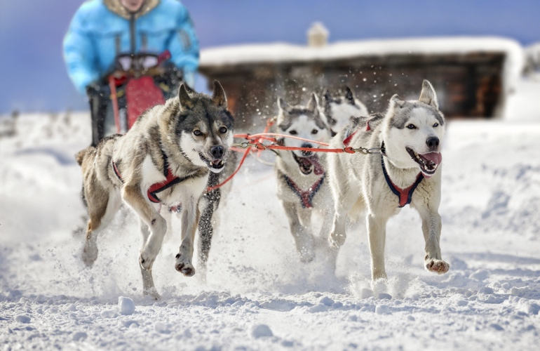 The husky dog sledding in Norway